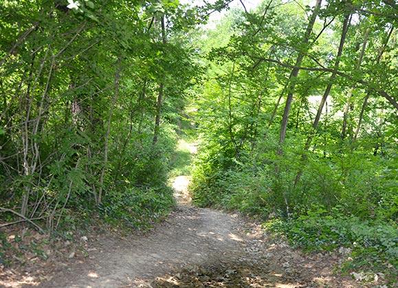 Gite nei boschi Amarant